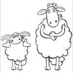 שון הכבשה לצביעה